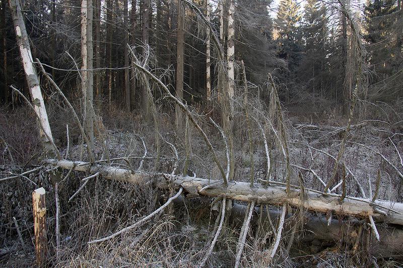Лес вдоль трассы5