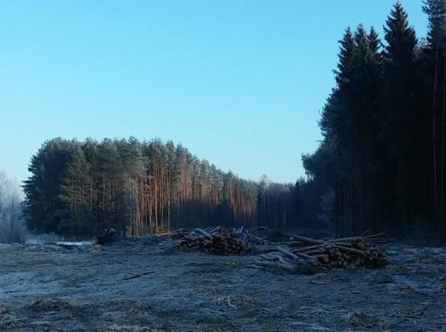 Лес под дорогу1