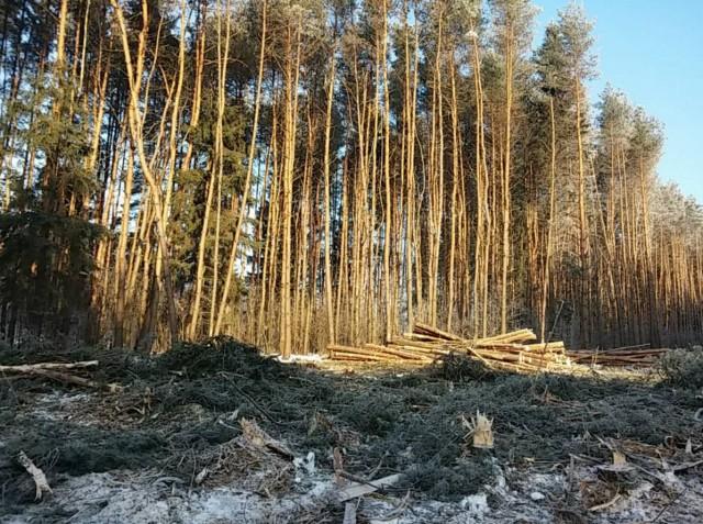 Лес под дорогу2
