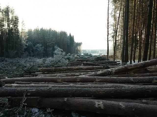 Лес под дорогу4