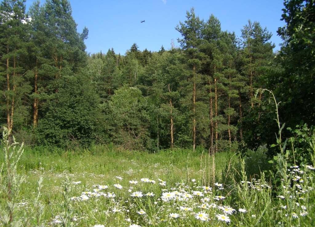 07-2014-лес 2-1