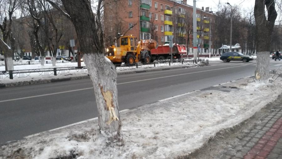 Деревья побиты1