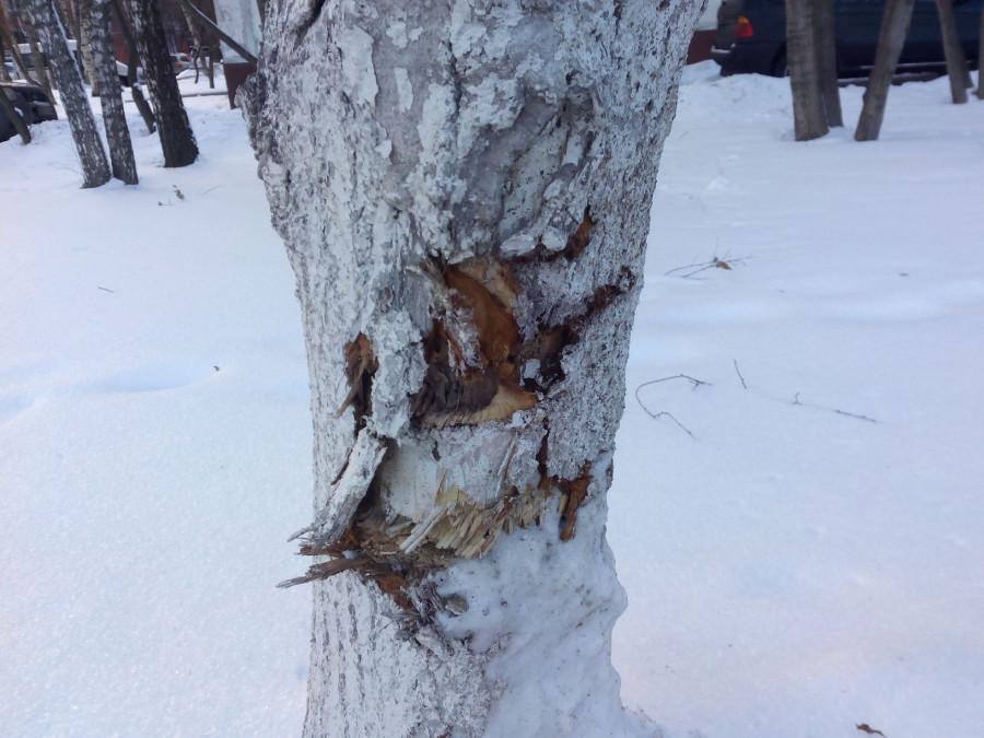 Покалеч деревья2