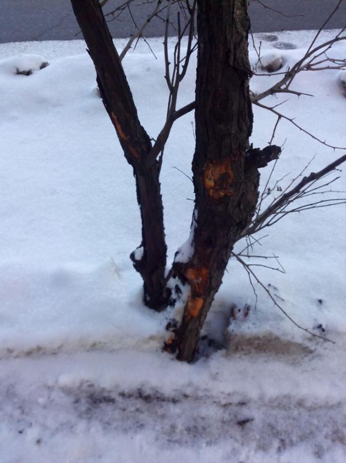 Покалеч деревья3