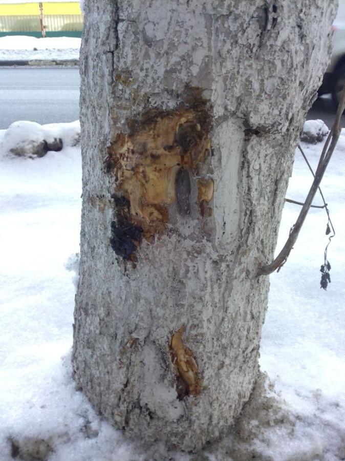 Покалеч деревья5