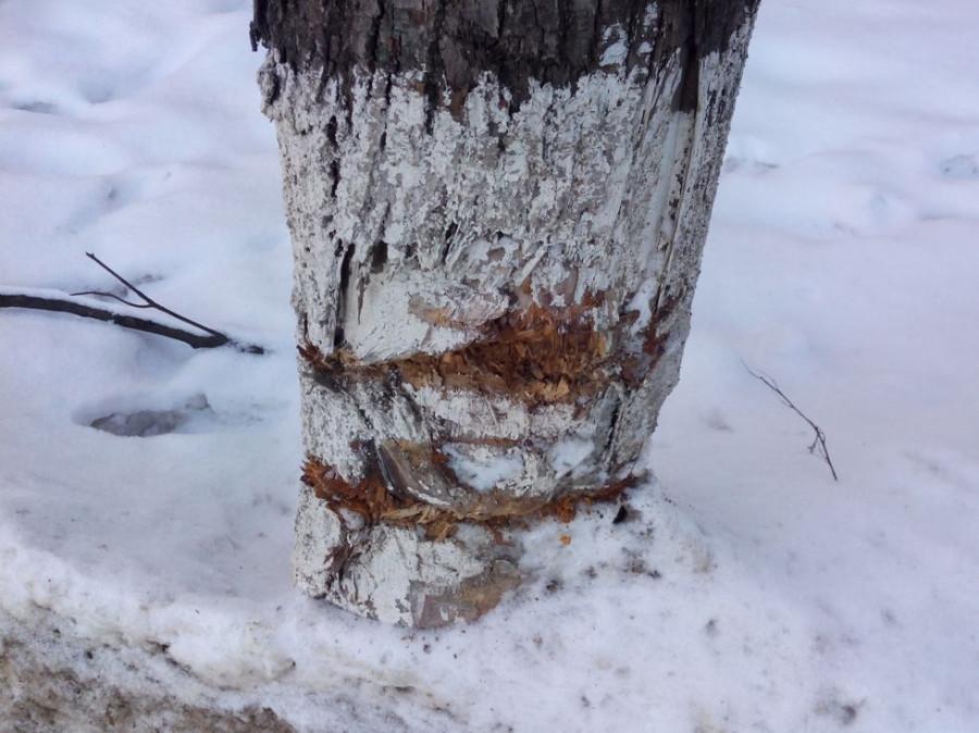 Покалеч деревья8