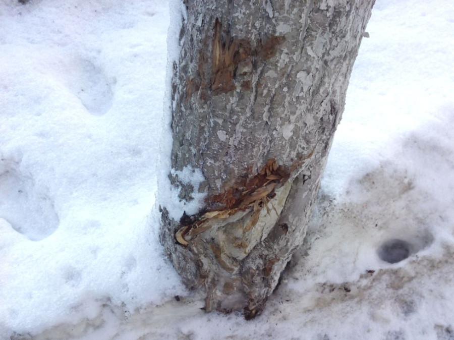 Покалеч деревья10