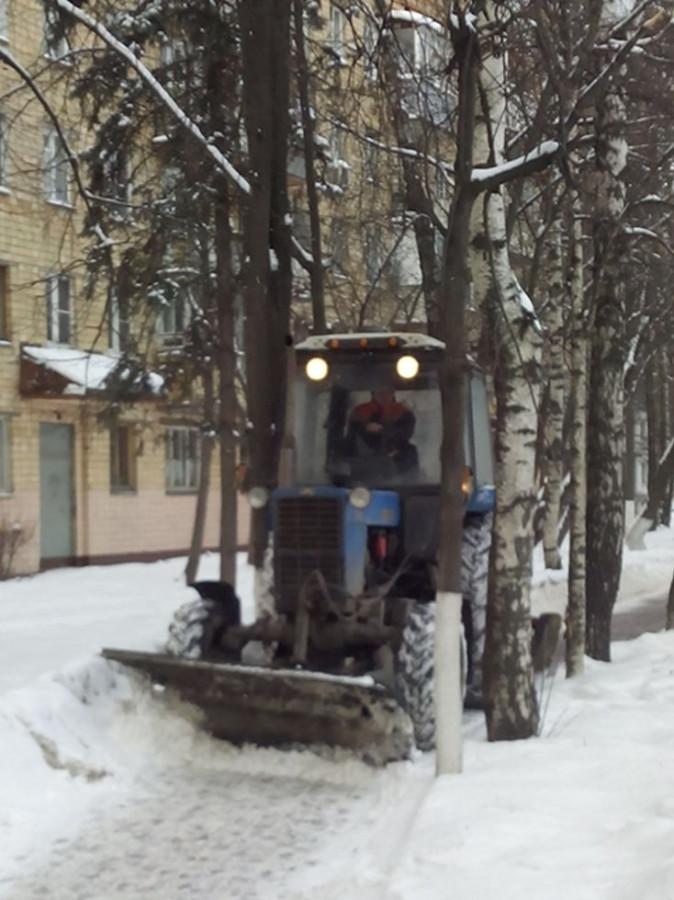 Покалеч деревья11