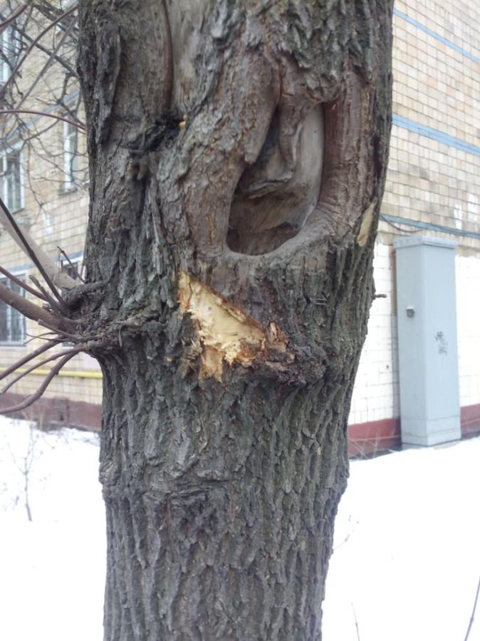 Покалеч деревья12