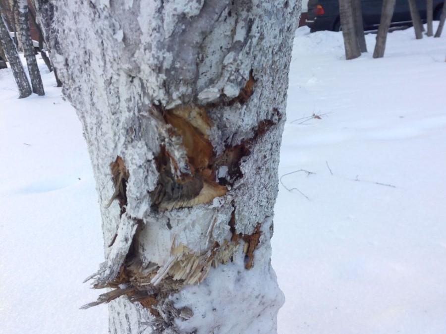 Покалеч деревья13