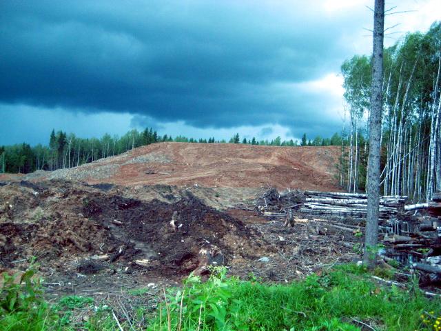 Vyrubka-07-2012