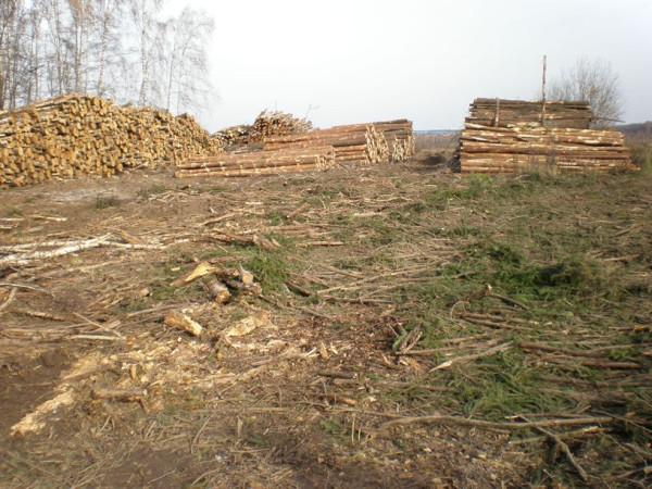 Pik-les-Vyrubka1