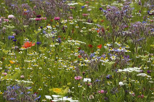 Trava-cvety
