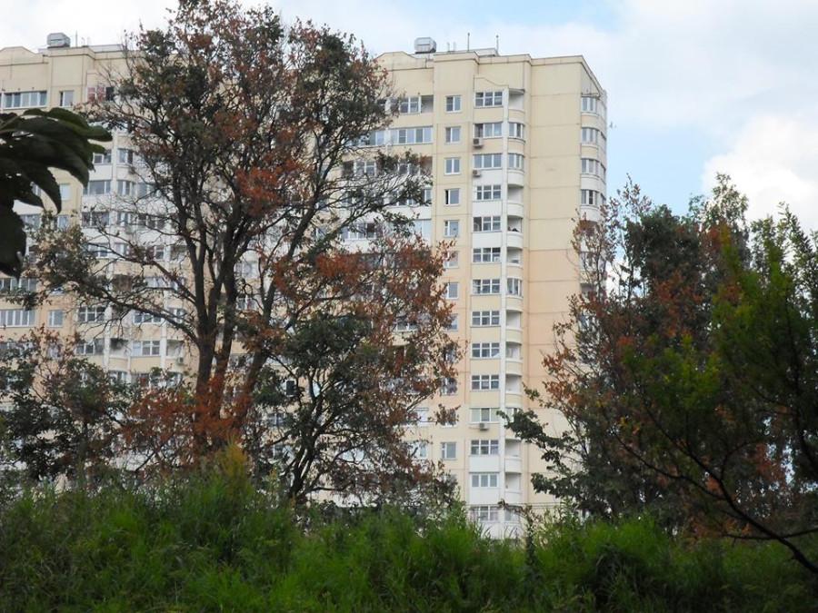 07-2013-Gibel-derevyev4