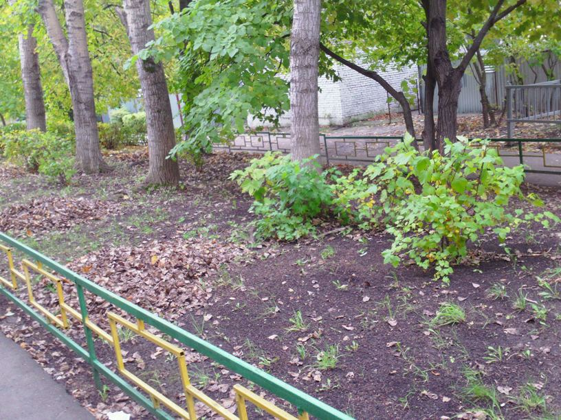 Uborka-listvy