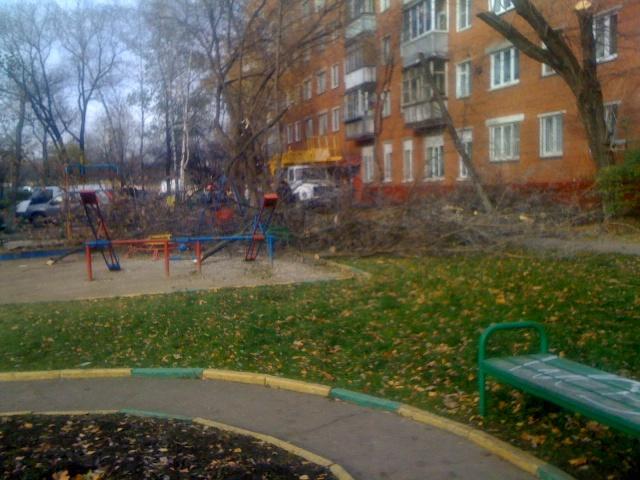 Vyrubka-23-10-2013-6