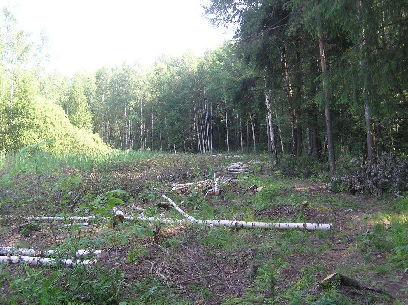 Vyrubka-lesa1
