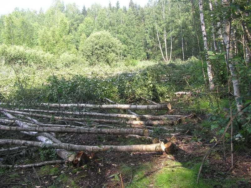 Vyrubka-lesa2