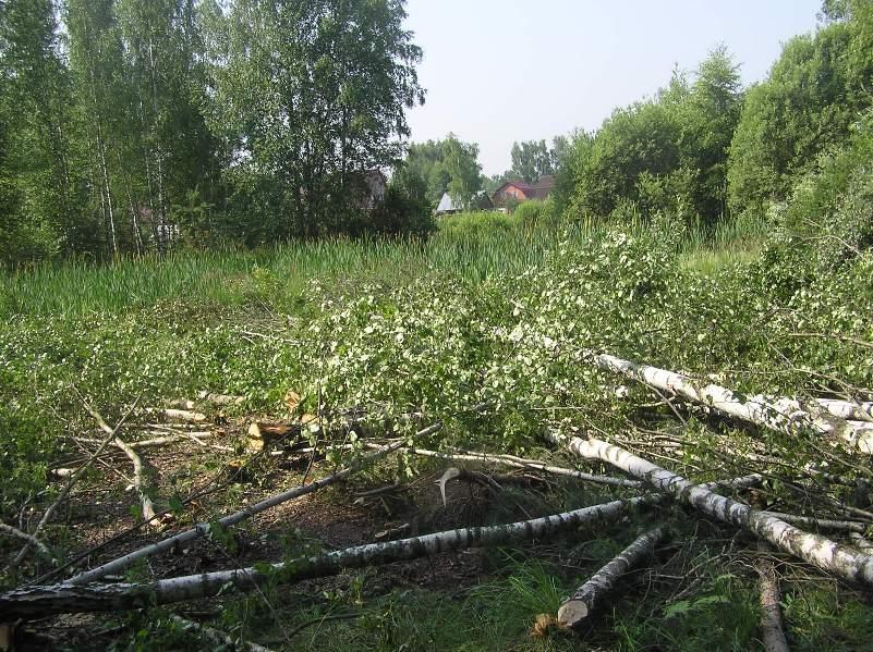Vyrubka-lesa3