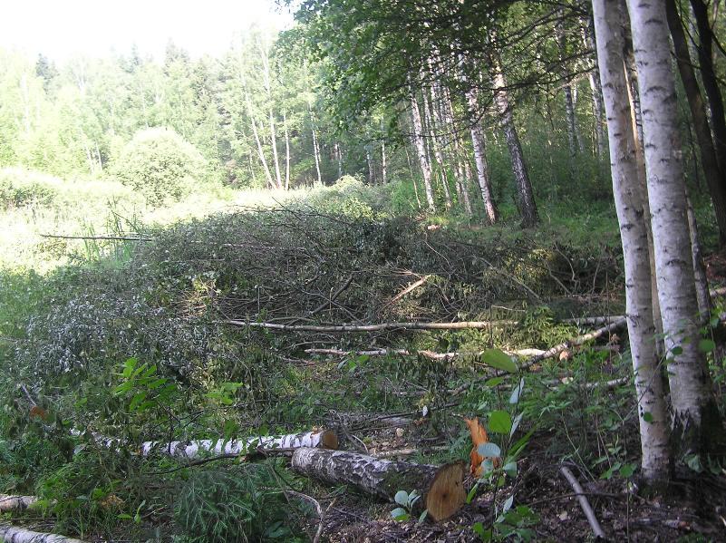 Vyrubka-lesa4