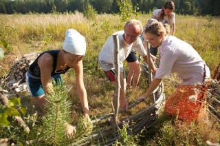 Обустройство лагеря - строительство плетня