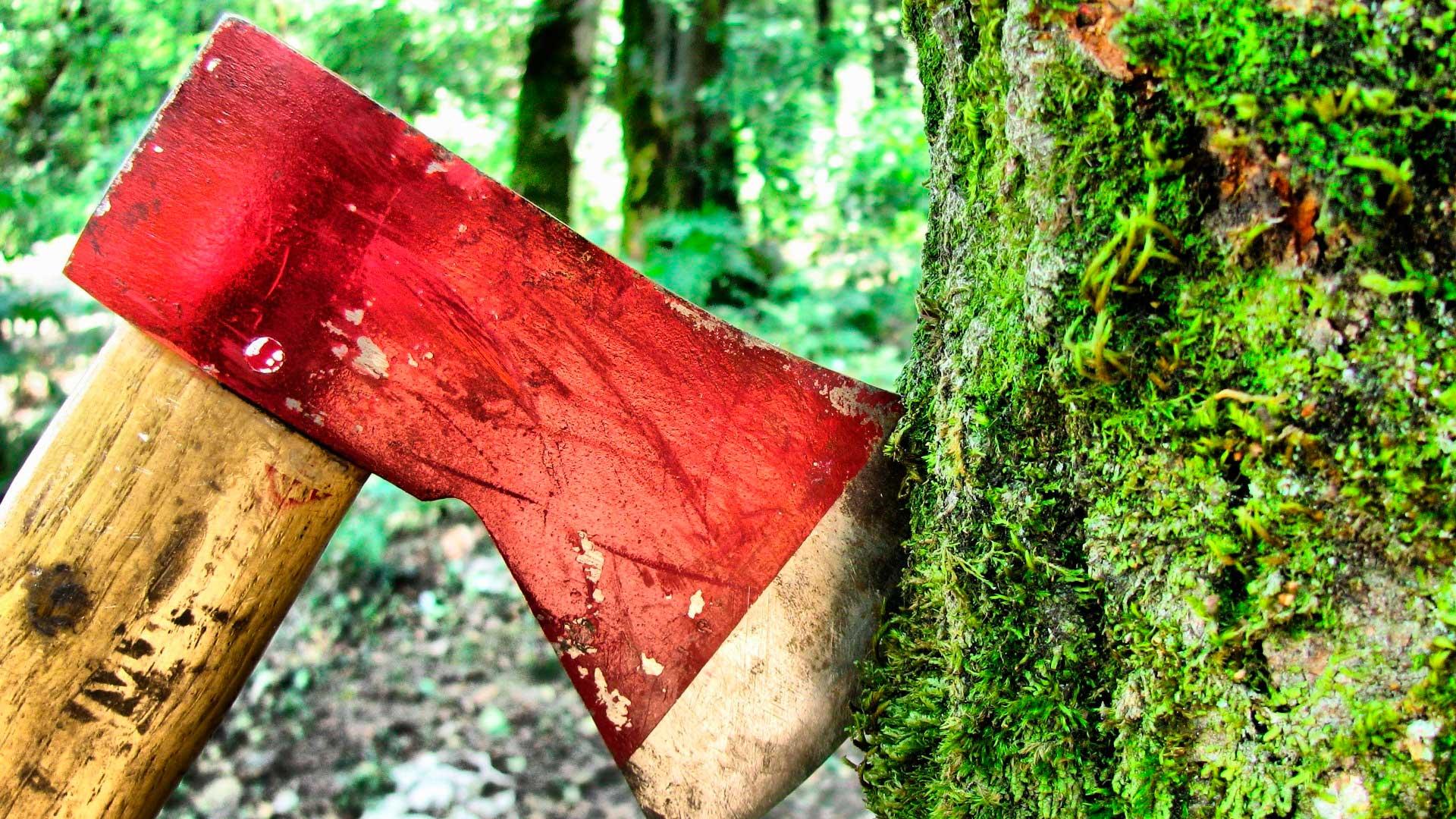 «Зеленые» снова врут. Тропические леса не находятся на грани исчезновения