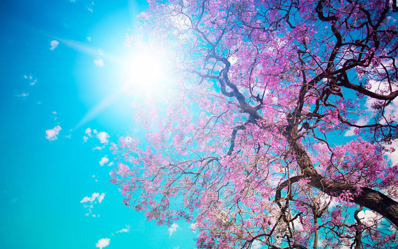 spring-10