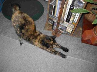 Tortoise Cat Stretch