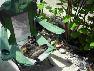 Tortoise Cat relaxing in the green chair in the rock garden