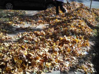 Piles of mostly bright orange Maple leaves being rakes up by a neighbor on N. Astor Street in Milwaukee, Wisconsin, late October 2010, by ECP (a.k.a. Shamanic-Shift) on Flickr.com