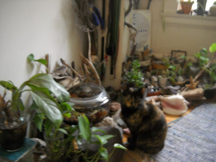 The Tortoise Cat, slightly blurry, next to the indoor rock-garden near the northeast window
