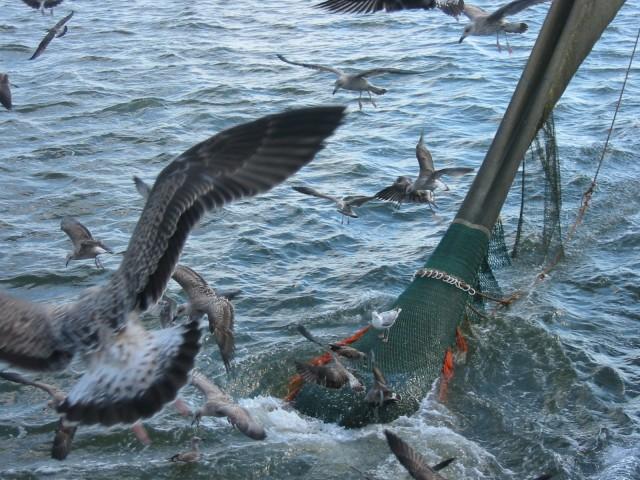 Seabirds, by ImageAfter.com
