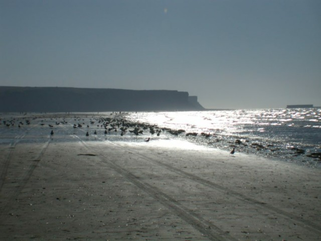 Photo: Seascape, gulls, bluff and sky by ImageAfter.com