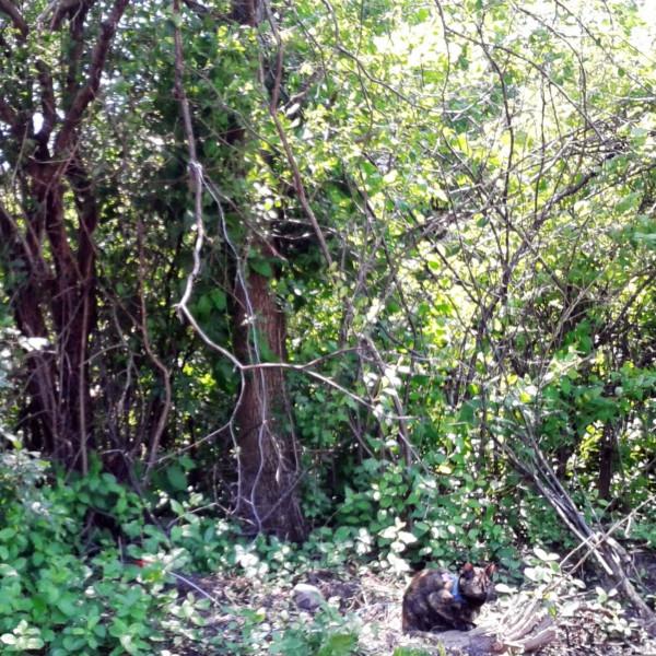 The Tortoise Cat tree guarding in Oak Creek, WI, July 2013