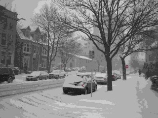 A gentle giant of a snowstorm blew into our east side Milwaukee neighborhood on February 9, 2010.