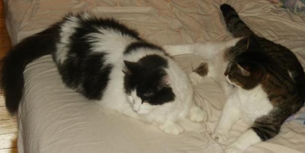 Cats, October 2004