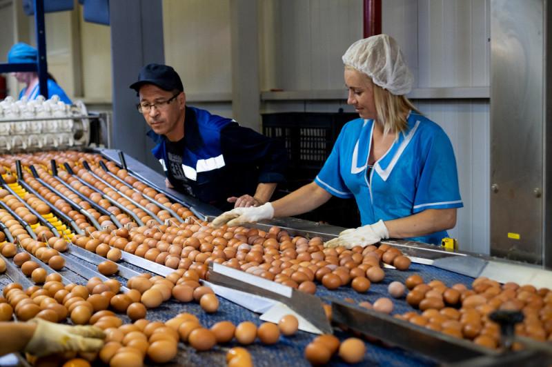 Первичная сортировка — из общей массы выбирают грязные и треснувшие яйца.