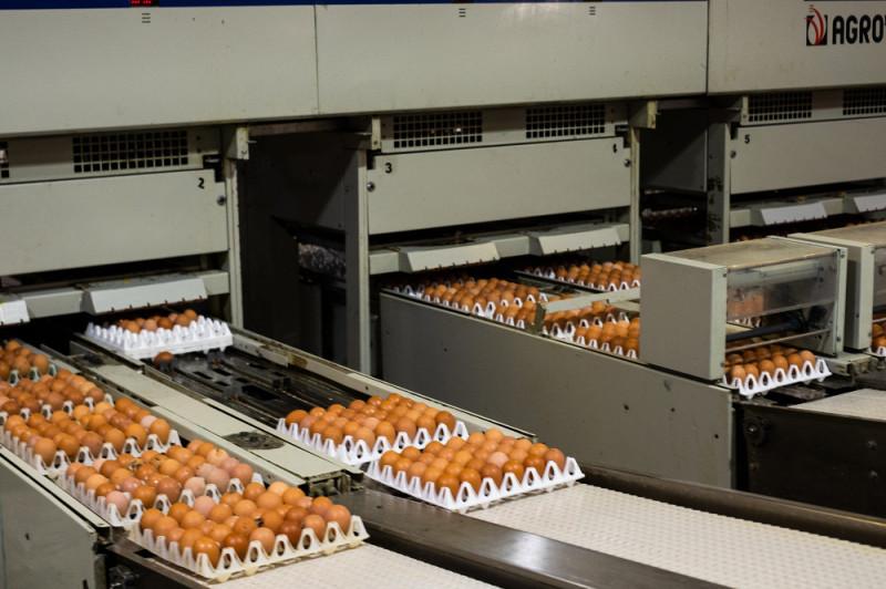 На отсортированные яйца наносится маркировка с обозначением категории.