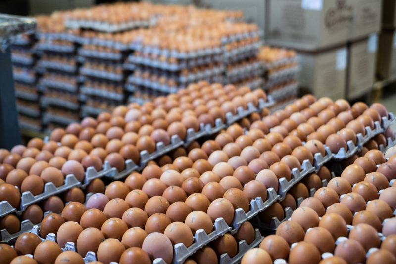 Сотни тысяч яиц каждый день упаковывают на фабрике.