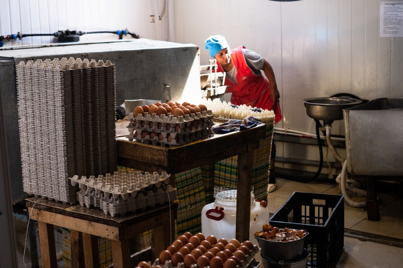 Грязные яйца в «Сметанино» моют вручную.