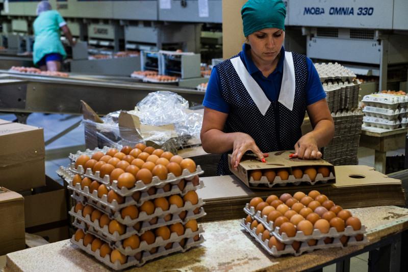 Каждый сотрудник помимо зарплаты получает еще и 30 яиц в месяц бесплатно.