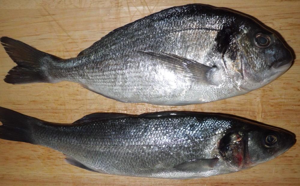 Рыба дорадо и сибас