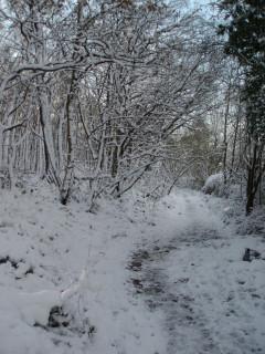Snowy Kentish woods