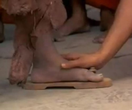 lotus feet