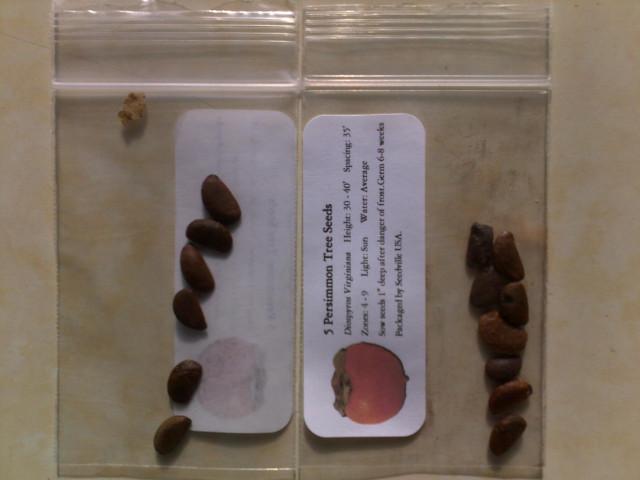 Виргинская Хурма (семена из конверта)