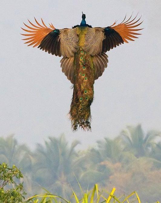 как летают!