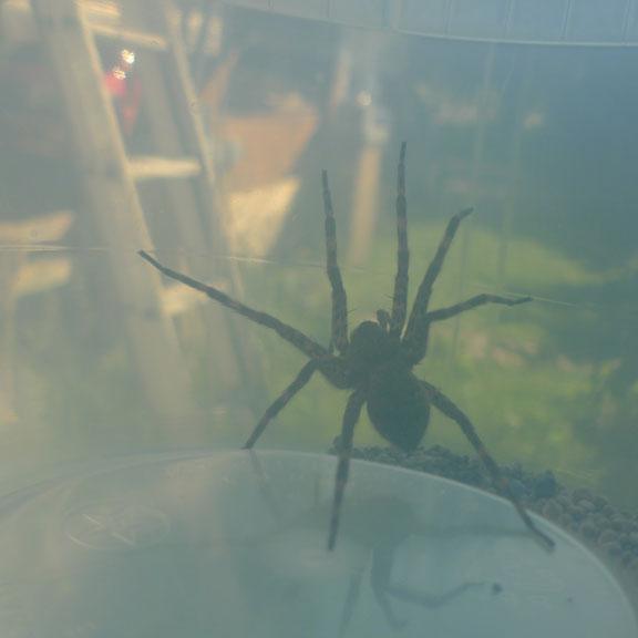 6-13-12-spider