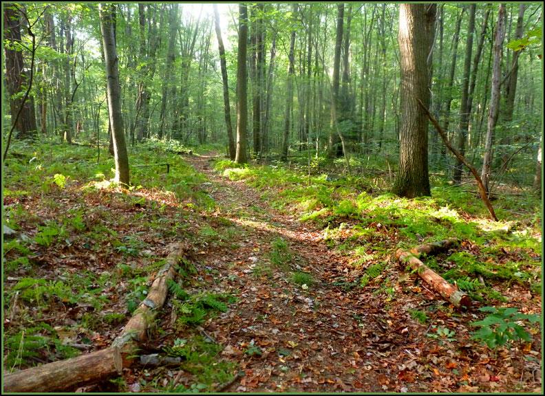 trail 9-13-12