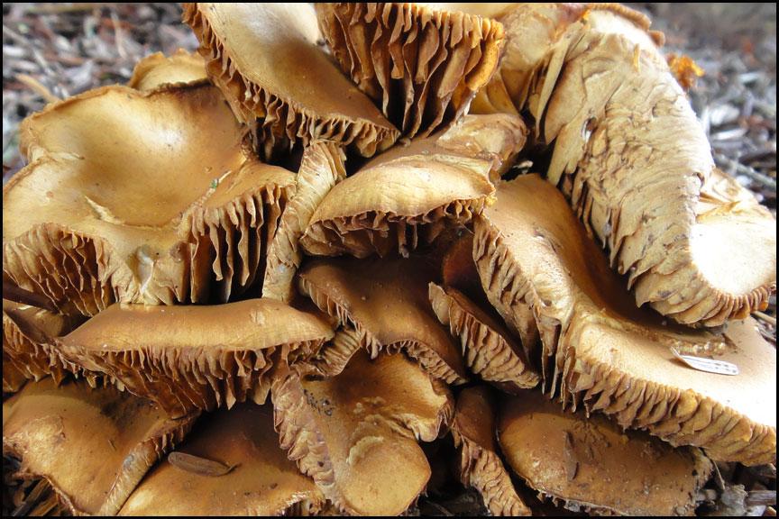 mushroom-11-11-12