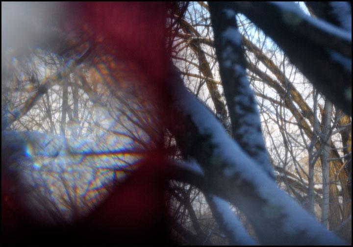 hummingbird-window-trees